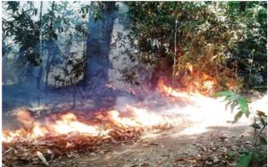"""...Ilustrasi Kebakaran Hutan..."" Photo By : Red. NRMnews.com"