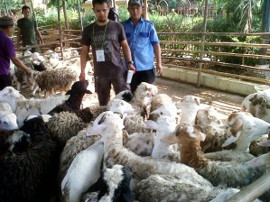 """...Ilustrasi Pedagang Kambing..."" Photo By : Red. NRMnews.com"