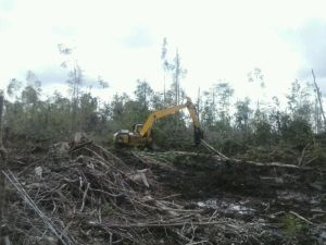 """...Ilustrasi Deforestasi Hutan...""  Photo By : Red NRMnews.com"