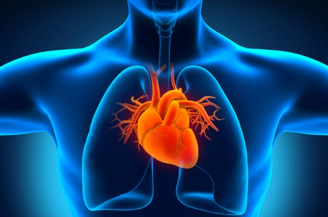"""....Ilustrasi Jantung yang jadi sumber penyakit Kardiovaskular..."""