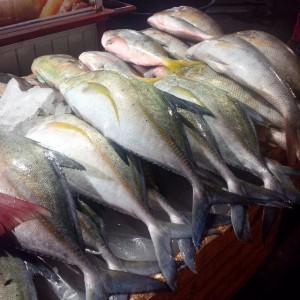 """""""...Ikan Segar Hasil Tangkapan Nelayan..."""" Photo By : Red.NRMnews.com"""